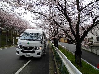 花見ドライブ.jpgのサムネイル画像